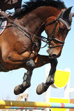 Zamyka up przedstawienie skokowy koń Fotografia Royalty Free