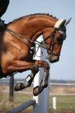 Zamyka up przedstawienie skokowy koń Zdjęcia Stock