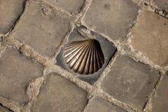 Zamyka up przegrzebek skorupy set w brukującej ulicie w Bruges Fotografia Royalty Free