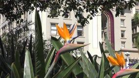 Zamyka up ptak raju kwiat zbiory wideo