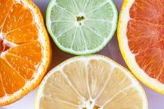 Zamyka up różnorodne cytrus owoc cytryna, wapno, mandarynka i grapefruitowy - Myers, obraz stock