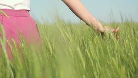 Zamyka up ręka bieg przez pszenicznego pola zbiory