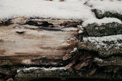 Zamyka up rżnięty drzewny bagażnik jako tło Stara drzewnego bagażnika tekstura i tło dla projekta Naturalny i organicznie tło Obraz Stock