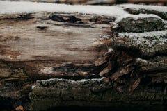 Zamyka up rżnięty drzewny bagażnik jako tło Stara drzewnego bagażnika tekstura i tło dla projekta Naturalny i organicznie tło Fotografia Royalty Free