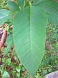 Zamyka up roślina liść Obraz Stock