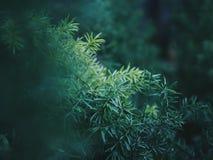 Zamyka up roślina liście Zdjęcia Royalty Free