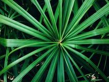 Zamyka up roślina liście Obrazy Royalty Free