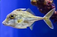 Zamyka up ryba Fotografia Stock