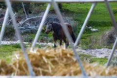 Zamyka up siano z ogiera koniem w tle fotografia stock