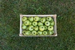 Zamyka up skrzynka z świeżymi jabłkami na trawie: Babcia Smith fotografia stock