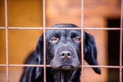 Zamyka up smutny czarny pies w klatce Obraz Royalty Free