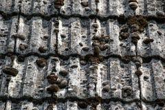 Zamyka up starzeć się dekarstwo płytki na starym domu w wiosce Mnóstwo mech na kafelkowym dachu hovel błękitny wsi pusty drogowy  zdjęcia stock