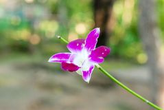 Zamyka up Storczykowy kwiatu kwiat zdjęcia stock