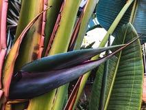 Zamyka up tropikalny drzewko palmowe Abstrakcjonistyczna palmowa tekstura dla natury tła Obrazy Royalty Free