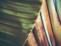 Zamyka up tropikalny drzewko palmowe Abstrakcjonistyczna palmowa tekstura dla natury tła Zdjęcie Royalty Free