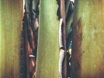 Zamyka up tropikalny drzewko palmowe Abstrakcjonistyczna palmowa tekstura dla natury tła Obraz Stock