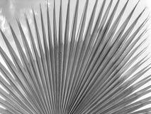 Zamyka up tropikalny drzewko palmowe Abstrakcjonistyczna palmowa tekstura dla natury tła Zdjęcia Stock