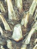 Zamyka up tropikalny drzewko palmowe Abstrakcjonistyczna palmowa tekstura dla natury tła Fotografia Royalty Free