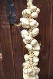 Zamyka up wiązka biały czosnek Alium sativum jabłka ogrodowego zmielonego żniwa dojrzały czas drzewo suszyć na drewnianym tle Wie Obraz Stock
