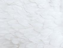 Biali piórka Obraz Stock