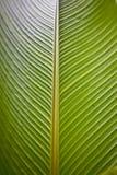 Zamyka up wielka paprociowa roślina Obrazy Royalty Free