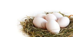 Zamyka up świezi kaczek jajka Fotografia Royalty Free