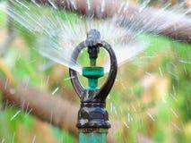 Zamyka up wodny springer w ogródzie rolnictwo obrazy stock