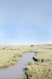 Zamyka up wodopój w Masai Mara parku narodowym Obraz Stock