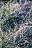 Zamyka up wrzos roślina fotografia royalty free