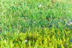 Zamyka up zielona trawa Obrazy Stock