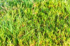 Zamyka up zielona trawa Obrazy Royalty Free