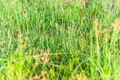 Zamyka up zielona trawa Fotografia Stock
