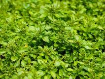 Zamyka up zielonej rośliny tło Obraz Stock