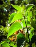 Zamyka up zielony krzak fotografia royalty free