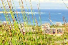 Zamyka up zielony reet trawy chodzenie w wiatrze z oceanem i pokrywać strzechą dachowych chałupach w tle przy Spokojną zatoką Zdjęcia Stock