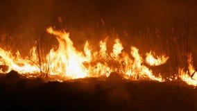 Zamyka w górę widoku okropny niebezpieczny dziki ogień przy nocą w polu Płonąca sucha słomiana trawa Ogromny obrzar natura wewnąt zbiory wideo