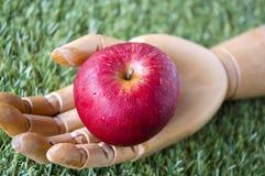 Zamyka w górę świeżego jabłka w ręce Obraz Royalty Free
