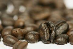 Zamyka w górę świeżych kawowych fasoli i odizolowywający na białym tle, świeżym materiale, zdrowym napoju i międzynarodowym napoj Obrazy Stock