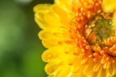 zamyka w górę żółtego kwiatu tła kwiatu abstrakta abstrakcjonistycznego backg Zdjęcia Stock