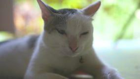 Zamyka w górę białego kota lying on the beach na zmielony plenerowym Portreta śliczny mały kot na zmielony plenerowym zbiory