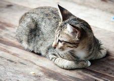 Zamyka w górę bocznej twarzy przybłąkany kot Fotografia Royalty Free