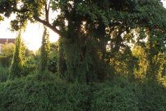 Zamyka w górę Bush blisko rzecznego tropikalnego lasu fotografia royalty free