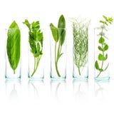 Zamyka W górę butelek świezi aromatyczni ziele Świeża mędrzec gałąź, s Obraz Royalty Free