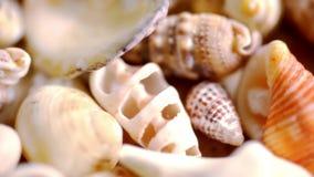 Zamyka w górę cockleshell, skorup i seashells, Makro- zbiory