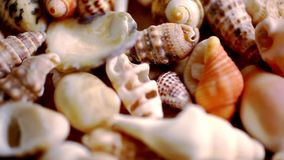 Zamyka w górę cockleshell, skorup i seashells, Makro- zbiory wideo