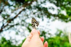 Zamyka w górę części motyla skrzydło na natury tle Fotografia Royalty Free