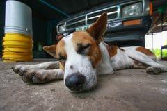 Zamyka w górę dosypianie psa fotografia stock