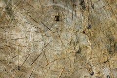 zamyka w górę drewna suchą teksturę Fotografia Stock