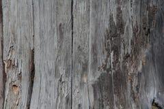 zamyka w górę drewna suchą teksturę Obraz Stock