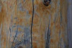 zamyka w górę drewna suchą teksturę Zdjęcie Royalty Free